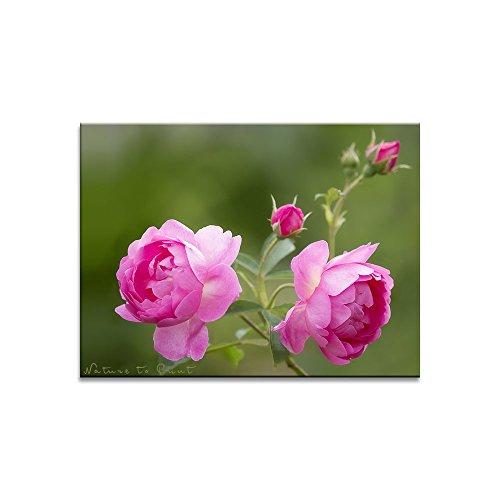 Rosenbild: Meine Queen im Rosengarten. Lichtechter Kunstdruck bzw. Fotobelichtung (Fotoprint) im Format 60cm x 45cm