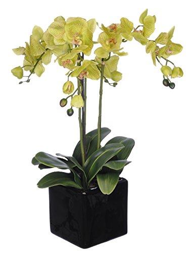 Artificial Triple-stem Phalaenopsis Orchid Arrangement Lime Green