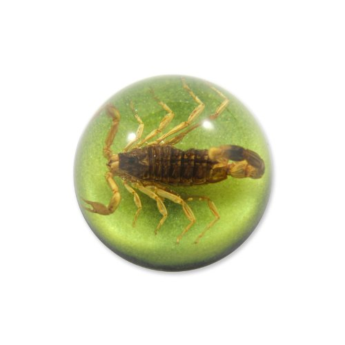 "1.9 "" Golden Scorpion Dome Paperweight Green"