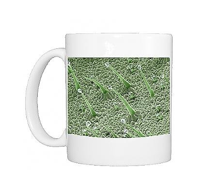 Photo Mug Of Scanning Electron Micrograph (Sem) Leaf Hairs - Of Dicot Plant Showing From Ardea Wildlife Pets