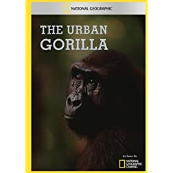The Urban Gorilla