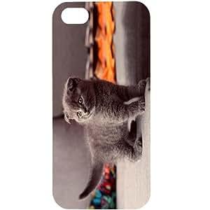 Casotec Gray Kitten Design Hard Back Case Cover for Apple iPhone 5 / 5S