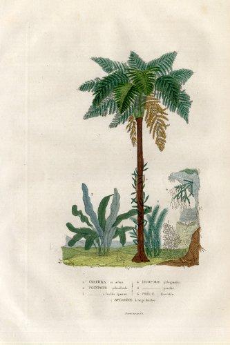 theprintscollector-antique-motif-arbre-fougere-moss-prele-drapiez-1853-