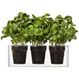 Boskke Cube 3 Small Planters, Clear by Boskke
