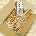 山口産自然薯『神秘の根っこ』1kg(山芋・自然生)