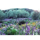 Search : California Wildflower Mix 1,000+ Seeds No Filler