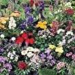 South Eastern Horticultural Pack X24 'Mixed Varieties' Garden Perennial Plug Plants Starter Value Pack