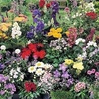 south-eastern-horticultural-pack-x24-mixed-varieties-garden-perennial-plug-plants-starter-value-pack