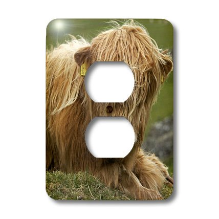 Lsp_82774_6 Danita Delimont - Farm Animals - Highland Cow, Farm Animal, North Yorkshire, England - Eu33 Dwa0158 - David Wall - Light Switch Covers - 2 Plug Outlet Cover