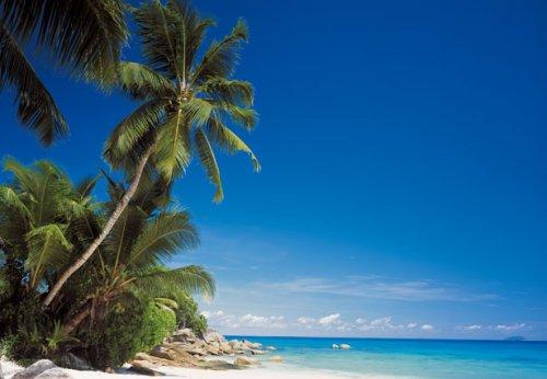 Fototapeten Palmenstrand : Geographic Escape – 8-teilig – Palme, Strand, Meer, Karibik, Malediven