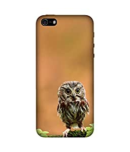 chnno owl 3d Printed Back Cover For Apple iPhone 5s