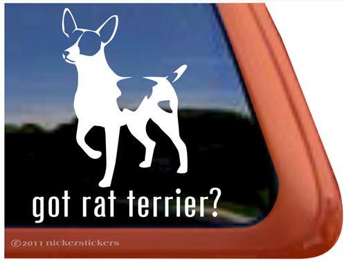 Got Rat Terrier? ~ Dog Vinyl Window Decal front-396598