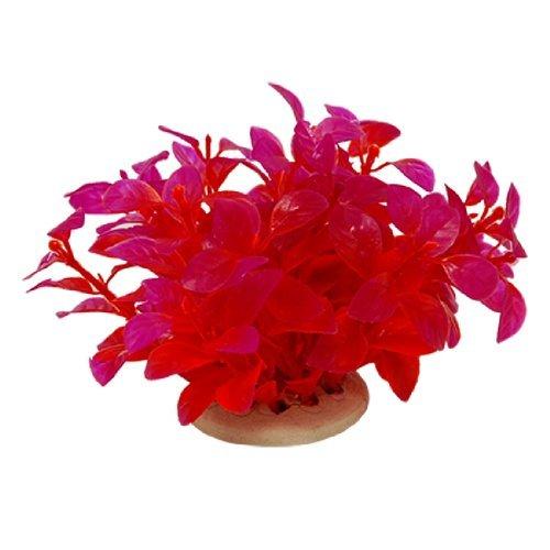 Plante aquarium poisson rouge for Poisson rouge plastique