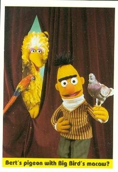 Bert's pigeon with Big Bird's macaw? trading card (Sesame Street) 1992 Idolmaker #73 at Amazon's
