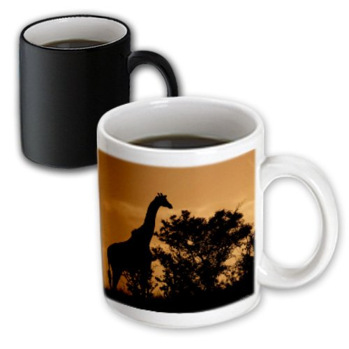 3Drose Giraffe Near Acacia Tree Sillouette At Sunset, Tanzania, Magic Transforming Mug, 11-Oz