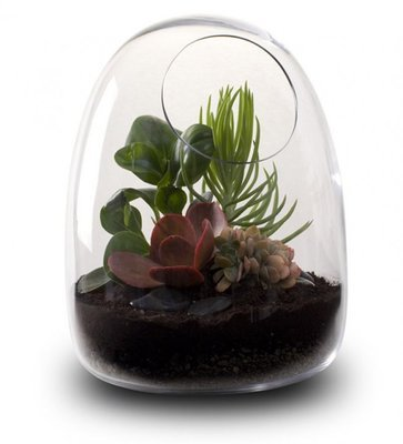 Bloss Decorative Modern Round Clear Glass Display Vases Microlandschaft Terrarium House Plant Terrarium, 6