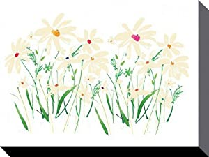 Posters: Flowers Stretched Canvas Print - Marguerite Daisy, Summer Thornton (16 x 12 inches)