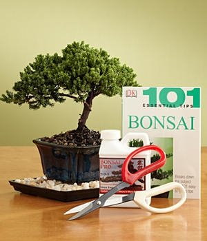 New! Indoor Bonsai Kit by Sheryls Shop