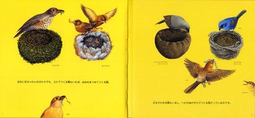 鳥の巣いろいろ