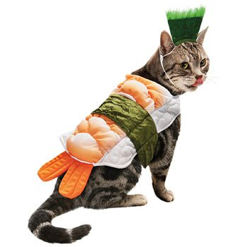costume for cats