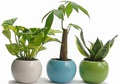 陶器鉢3寸丸ポトス、パキラ、サンス3種セット