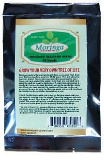 50 Moringa Oleifera Seeds
