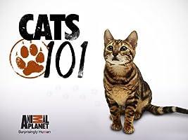 Cats 101 Season 1