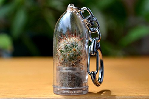 shining-knight-cactus-terrarium-keychain-accessory-keychain-gift