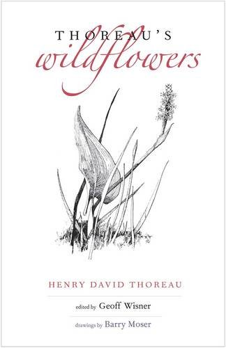 henry david thoreau writing style Where i lived - download as pdf for discussion what is henry david thoreau calling for early in paragraph 2 when he using the reflective style of thoreau.
