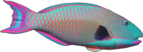 """Prosticker 1506 (One) 2.5""""X 7"""" Fishing Art Series Parrotfish Tropical Fish Decal Sticker"""