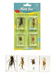 Micro Fun Bug Specimen Set - Includes Cricket, Locust, Yellow Leaf Beetle, and Crab -Encased in Acrylic Blocks Measuring 1.75\