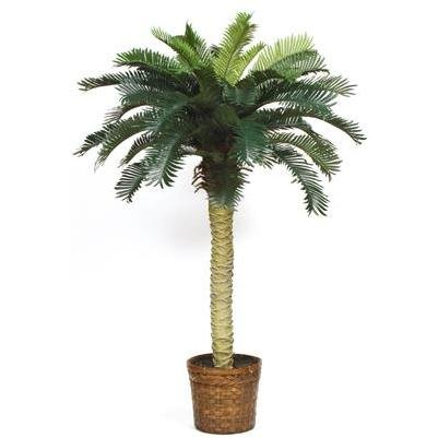 Sago Silk Palm Tree 4′