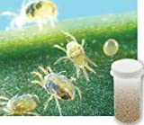 5,000 Live Adult Predatory Mites - A Mix of Predatory Mite Species for Spider Mite Control - Ships Next Day!l