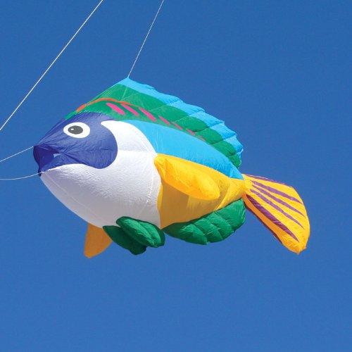 8 ft. Kite Line Laundry Peacock Wrasse Fish