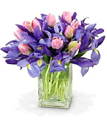 Delicate Beauty - Theshopstation Same Day Flower Delivery Fresh Flowers Orchids - Wedding Flowers - Birthday Flowers - Send Flowers - Iris Bouquets