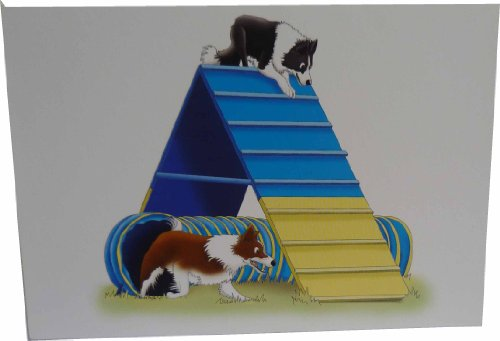 border-collie-agilidad-un-marco-notecards-pack-de-10