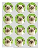 12 kitten cute and fluffy cat rice paper fairy cup cake 40mm toppers pre cut decoration