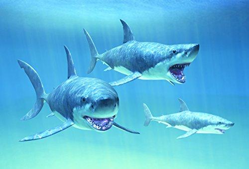 Gift Trenz Sharks- Motion Magnet - 1