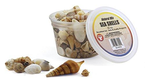 bucket-osea-shells-10-ounces-natural