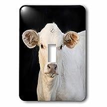 3dRose LLC lsp_94511_1 Charolais Calf, Cow, Welder Ranch, Texas Us44 Mpr0037 Maresa Pryor Single Toggle Switch