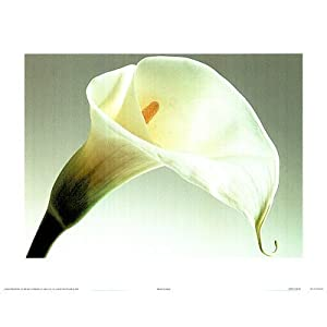 Calla Lilly (Color Close-Up) Art Poster Print - 13x19 custom fit with RichAndFramous Black 19 inch Poster Hangers