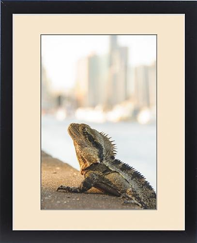 framed-print-of-city-lizard