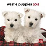 West Highland White Terrier Puppies 2012 Small Wall Calendar