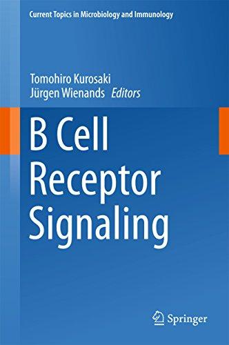 B Cell Antigen Receptors