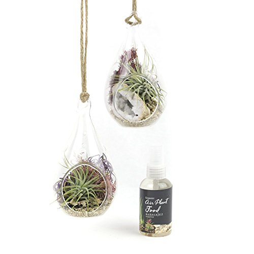 MakersKit Air Plant Terrarium Hanging Vases, Set of Two Teardrops + Organic Plant Food
