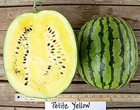 Amazon.com : Petite Yellow Watermelon Seeds 20 Seed Pack by ...