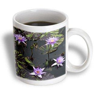 Danita Delimont - Gardens - Usa, Louisiana, New Orleans, Botanical Garden - Us19 Jwi0066 - Jamie And Judy Wild - 11Oz Mug (Mug_144495_1)