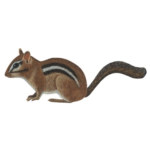 Wild Life Animals Wall Sticker Mural Chipmunk - 1