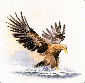 heritage-crafts-flights-of-fancy-cross-stitch-kits-eagle-in-flight-14-count