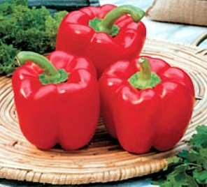 Red Bell Mercury Pepper-75 Seeds-GARDEN FRESH PACK!